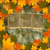 Bright multicolored autumn leaves on abstract beautiful background Stock Photo
