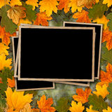 Bright multicolored autumn leaves on abstract beautiful background Royalty Free Stock Photo
