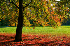 Bright multicolored autumn tree in a park. Frankfurt am Main Royalty Free Stock Photo