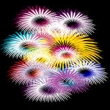 Bright multicolored fireworks on black background. Vector Royalty Free Stock Images