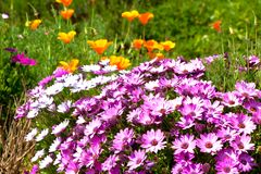Bright multicolored flowerbed Stock Photo