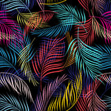 Bright multicolored pattern of leaves of palm trees Stock Images