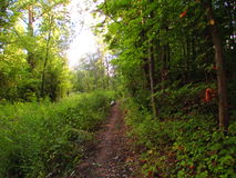 Bright Narrow Forest Path Royalty Free Stock Images