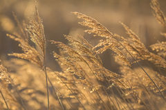 Bright natural background with at sunrise Royalty Free Stock Photography