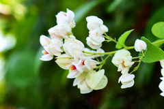 Bright natural white flower with blurred background.  Stock Photography