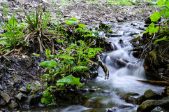 Bright nature forest landscape mountain river. Royalty Free Stock Photo