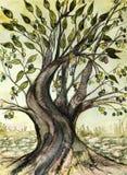 Bright olive tree in autumn.