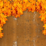Bright orange autumn leaves on the background of rusty metal Royalty Free Stock Photography