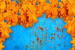 Bright orange autumn leaves on the background of rusty  wal Stock Image
