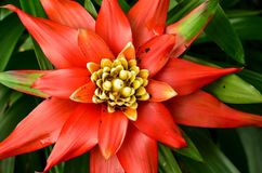A Bright Orange Botanical Star Royalty Free Stock Photos