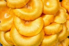 Bright orange caps from omphalotus illudens, or jack-o'-lantern mushroom Royalty Free Stock Photo