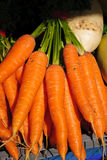 Bright orange carrots Royalty Free Stock Images