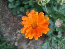 Bright orange color flower with orange color in centre stock photography