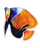 Bright orange fish with a black spot and light blue outline. Bright orange fish with blue and black spot with ornament dots on body and fins, blue lips and light Royalty Free Stock Images