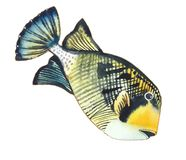 Bright orange fish with white stripe and black outline. Orange face floating diagonally to the right  balistoides viridescens Stock Photos
