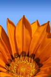 Bright orange flower Stock Photography