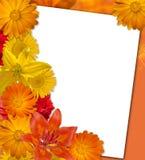 Bright orange flower background. Autumn background. Stock Image