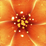 Bright orange flower Royalty Free Stock Photo