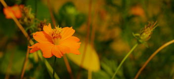 A bright orange flower Stock Photography