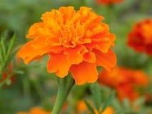 Bright orange flower stock photo