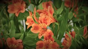 Bright orange flowers with a green leaf Stock Photos