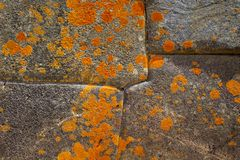 Bright orange fungus growing on ancient rock formation in Inka citadel in Ollyntaytambo royalty free stock image