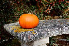 Bright orange gourd on a stone bench Royalty Free Stock Photos