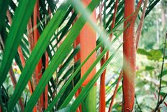 Detail shot of some tropical plants in Costa Rica. Bright orange and green plants. Detail shot in a Botanical Garden in Cahuita Costa Rica Royalty Free Stock Photos