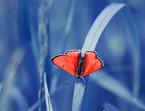 Bright orange little butterfly sits on the background of a blue Royalty Free Stock Photography