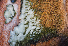 Bright orange moss and ice on the bank of the creek Stock Image