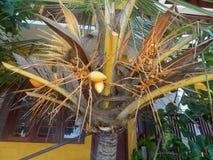 Bright orange palm. Orange coconut, orange palm, orange house – absolute harmony royalty free stock photography