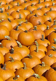 Bright orange pumpkin collection Stock Photo
