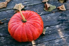 Bright orange pumpkin on an old wooden gray table with dry autumn leaves stock photography