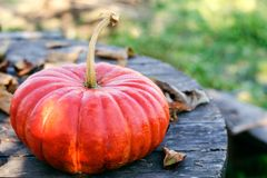 Bright orange pumpkin on an old wooden gray table with dry autumn leaves royalty free stock photography