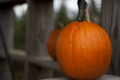 Bright orange pumpkin Stock Images