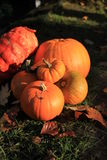 Bright orange pumpkins Royalty Free Stock Photography