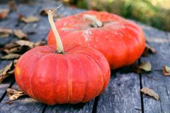 Bright orange pumpkins on an old wooden table with dry autumn leaves royalty free stock images