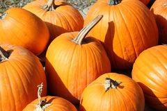 Bright orange pumpkins. With stems sitting on the ground Royalty Free Stock Image