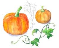 Bright orange pumpkins Royalty Free Stock Photo