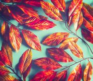 Bright orange red autumn leaves background on sunny turquoise . Fall pattern layout. Flat lay, top view stock photo