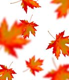 Bright orange red blurred falling maple leaves isolated on white background. Seasonal banner or holiday vintage decor. Realistic. Vector illustration royalty free stock photos