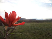 Bright Orange And Red Flower Royalty Free Stock Photo