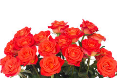 Bright orange  roses buds Royalty Free Stock Photography
