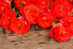 Bright orange  roses in water droplets Stock Photo