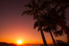 Sunset at One Tree Hill, Hamilton Island. Australia. Bright orange sunset at One Tree Hill with palm trees. Hamilton Island. Australia Stock Image
