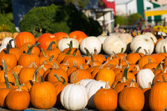 Bright Orange and White Pumpkins Stock Image