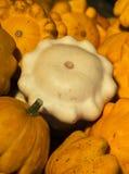 Bright orange-white squash collection. (Autumn 2008, Jukerfarmart, Zurich Stock Photos