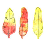 Bright orange and yellow hand drawn watercolor feathers with ink Royalty Free Stock Photo