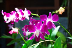 Bright orchids Royalty Free Stock Image