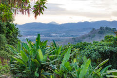 Bright outlook on nature conservation and saving tropical rain f Royalty Free Stock Image